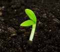 Seedling Royalty Free Stock Photos