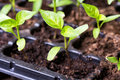 Seedling background macro shot photo Stock Image
