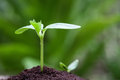 Seedling closeup on the spring natural background Stock Image
