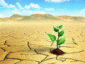 Seedling in the desert Royalty Free Stock Photography