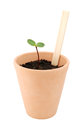 Seedling grows in a terracotta pot with a blank plant label flowerpot ready for your own title isolated on white background Stock Photo
