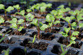 Seedling in a hothouse growing of plants hothouses for the further landing soil Stock Photography