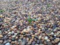 Seedling in rock garden Royalty Free Stock Photos