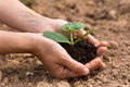 Seedling with soil in women hands Royalty Free Stock Photo
