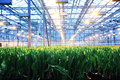 Seedling spring flowers agribusiness greenhouse Royalty Free Stock Images