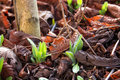 Seedlings coming out in early spring new are Royalty Free Stock Photos