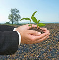 Seedlings in hand Royalty Free Stock Photos