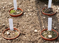 Seedlings in pots arranged the soil Royalty Free Stock Photos