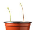 Seedlings strive for light Royalty Free Stock Photo