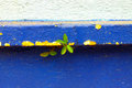 Seeds germinate on the wall Royalty Free Stock Photo