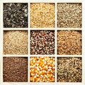 Seeds and grains variety Royalty Free Stock Photos
