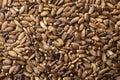 Seeds of a milk thistle Silybum marianum, Scotch Thistle, Maria Royalty Free Stock Photo