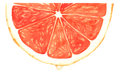 Segment of red grapefruit watercolor isolated Stock Images