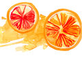 Segments of the orange drawn by watercolors on white background Stock Photo