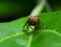 Selected focus of single colorful fly on a fresh green leaf