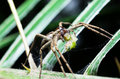 A selected focus of a spider with victim food in his mouth Royalty Free Stock Photo