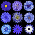 Selection Blue Flowers Selection Isolated on Black Stock Photos