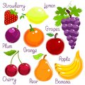 Selection of colorful tropical fruit with labels