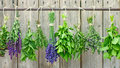 Selection of different fresh herbs hanging in front wooden fence Stock Photography