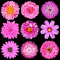 Selection of Pink White Flowers Isolated on Black Stock Image