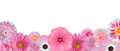 Selection of Various Pink White Flowers Row Royalty Free Stock Photo