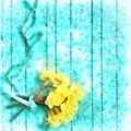 Selective Focus Bunch Of Yellow Narcissus Or Daffodil Flowers On Turquoise Wooden Background