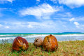 Coconut on green grass at the shore under cloudy and blue sky background Royalty Free Stock Photo