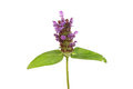 Self heal Royalty Free Stock Photo