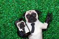 Selfie pug dog Royalty Free Stock Photo