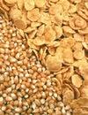 Sementes e corn-flakes do milho Imagens de Stock