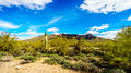 The semi desert landscape of Usery Mountain Regional Park with many Octillo, Saguaru, Cholla and Barrel Cacti Royalty Free Stock Photo