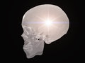 Semitransparent skull light radiates from Stock Photo