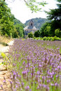 Senanque Abbey with lavender filed Royalty Free Stock Photography