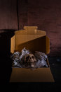 Send of the death still life skull on air buble and newspaper in box concept some bad guy skull for threaten or some friend sand Royalty Free Stock Images