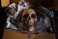 Send of the death still life skull on air buble and newspaper in box concept some bad guy skull for threaten or some friend sand Royalty Free Stock Image