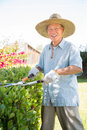 Senior Asian Gardener Working in Garden Stock Photography