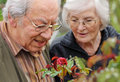 Senior couple looking to a rose Stock Image