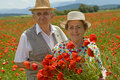 Senior couple picking flowers on a poppy field Stock Photography
