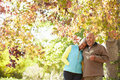 Senior couple walking through autumn woodland smiling Royalty Free Stock Photos