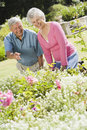Senior couple working in garden Stock Image