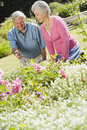 Senior couple working in garden Royalty Free Stock Image