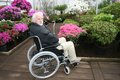 Senior gardener in wheel chair and his work green house Royalty Free Stock Photos