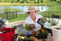 Senior lady gardener repotting houseplants removing them from the containers they have outgrown and combining them into large Stock Photos