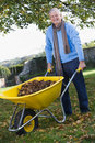 Senior man collecting leaves in wheelbarrow Stock Images
