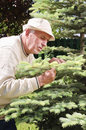 Senior man controlling tree disease Royalty Free Stock Photography