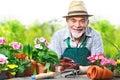 Senior man in the flower garden portrait of Stock Photo
