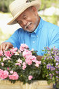 Senior Man Gardening Stock Photography