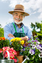 Senior man gardening Stock Photo
