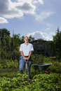 Senior man gardening happy men in allotment Stock Photography
