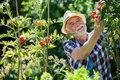 Senior man holding cherry tomato in the garden Royalty Free Stock Photo